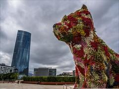 P9190880 Spain Basque Country Bilbao Jeff Koons flower dog Guggenheim Museum (Dave Curtis) Tags: 2013 bilbao em5 europe omd olympus dog flowers art sculpture guggenheim museum jeff koons