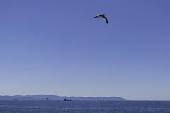 Isola d'Elba (EnzoCastaldi) Tags: sony a6000 isola delba sea mare 2418 zeiss