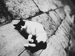 Relaxin' Cat (Jon-F, themachine) Tags: cats jonfu 2016 sony dscwx70  digital digitalphotography snapseed japan  nihon nippon   japn  japo xapn asia  asian fareastorient oriental aichi   chubu chuubu   nagoya  blackandwhite bw bnw monochrome monochromatic grayscale greyscale nocolor cat   kitty kittycat kitties stray strays pussycat pussycats puddytat neko