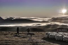 En Gorbea con los pastores (Jabi Artaraz) Tags: pastores artzainak mendia goiza maana amanecer landscape paisaje niebla ovejas rebaos perros jabiartaraz jartaraz zb euskoflickr
