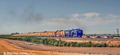 UNION PACIFIC--844 appr Ault, CO NB (milantram) Tags: unionpacific unionpacificsteam up844 denverpostfrontierdaystrain bigsteamlocos steamlocomotives steam passengertrains trains