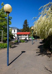 Blue October Skys (Jocey K) Tags: newzealand spring bankspeninsula akaroa flowers wisteria walkway lamp tree sky buildings shadows