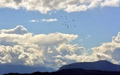 Mount Burrell (dustaway) Tags: modanville northernrivers nsw australia mountburrell blueknob nightcaprange nightcapnationalpark sky winter cloudscape landscape australianlandscape australianmountains