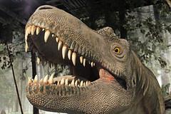 The dinosaur (Mala Gosia) Tags: kajtek malagosia aug222016 royaltyrrellmuseum drumheller alberta ab dinosaur indoor lowlight canoneosrebelt3i animal