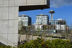 Olympic Sculpture Park (*~Dharmainfrisco~*) Tags: seattle park travel sculpture water stairs anne washington waterfront pacific northwest space queen needle sound olympic lower dharma puget dharmainfrisco