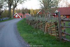 Kvällsljus på gärdesgården (per_pelle_johansson) Tags: småland vår väg solnedgång gård solljus kvällsljus gärdesgård kroksmåla
