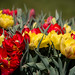 """2015_Floralia_Brussels-78 • <a style=""""font-size:0.8em;"""" href=""""http://www.flickr.com/photos/100070713@N08/17209254184/"""" target=""""_blank"""">View on Flickr</a>"""