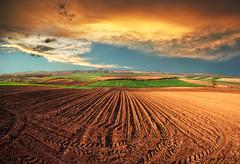 Spring shadow (Katarina 2353) Tags: sunset field landscape serbia vojvodina serbiainspired