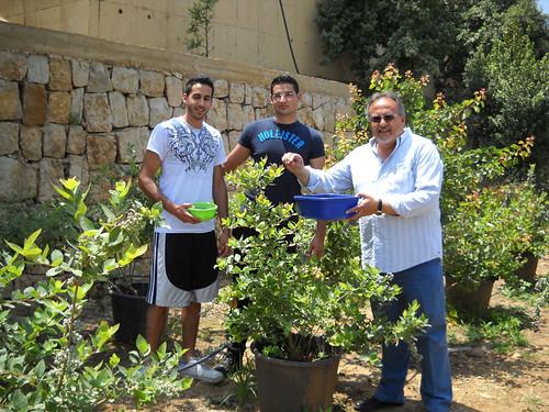 Talal Rayan and Tamim picking Blueberries May 2012