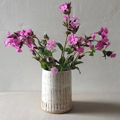Vertical Ridge Vase (Jude Allman) Tags: white ceramic ceramics stripes stripe pot pots jude pottery stoneware allman