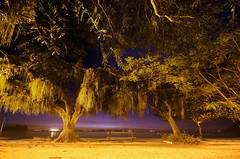 Praia da Guarda  noite (Jim Skea) Tags: longexposure trees brazil brasil riodejaneiro nightshot noturna paquet rvores baiadeguanabara guanabarabay exposiolonga praiadaguarda praiajosbonifcio