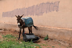 Rude Donkey! - Tahanaout, Morocco (Granyy) Tags: maroc donkey ane souk marrakech tahannaout morocco rude fuck insult