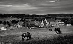 living in the past (dave_harrison56) Tags: horses blackandwhite mono beamish livinghistory countydurham pitvillage canon24105 beamishopenairmuseum canond70