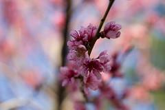 April 11-7591 (astudyincanon7d) Tags: 365project 365 sofarbehindonposting aprilshowers flowers blooms foliage spring