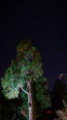 DSC05477 (regis.verger) Tags: temple zen nuit parc nocturne asiatique vgtal maulvrier