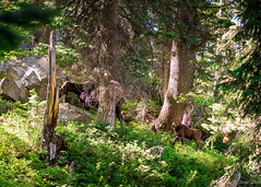 2016Upperpaintbrush13s-87 (skiserge1) Tags: park camping lake mountains america freedom hiking grand jackson national backpacking wyoming teton tetons