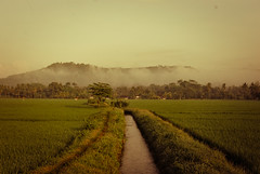 Paddy field irrigation (elly.sugab) Tags: water irrigation paddy field padi sawah irigasi fog haze