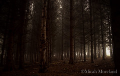 Fog (micahmoreland) Tags: uk longexposure autumn trees red england tree fall fog mystery forest dark dead scary woods moody gloomy ominous foggy evil creepy mysterious horror ambient haunting atmospheric