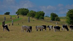 1288-31L (Lozarithm) Tags: landscape cows stones paths avebury 55300 pentaxzoom hdpda55300mmf458edwr