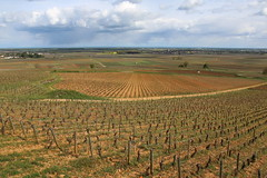 Savigny-ls-Beaune, Bourgogne, France (Baptiste L) Tags: bourgogne burgundy beaune grapevine vignes vineyard