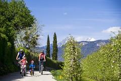 Alto Adige Marketing (Girolibero Easy Cycling Holidays) Tags: apfelbume apfelblte ausflug berg berge bergspitze bergspitzen biken eltern eppan fahrrad fahrradfahren familie frhling kinder rad radfahren sdtirolssden zypressen schneebedeckt alexfilz bike mehrerepersonen frhjahr alpinmediterran frhlingsblte bozen sdtirol italien