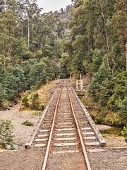 Vanishing Point (gecko47) Tags: railway tracks bridge sleepers bush rivercrossing thomsonriver walhalla historic restoration tourists victoria highcountry alpineregion goldmine ghosttown
