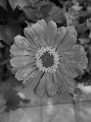 Flower (george.postoronca) Tags: ifttt 500px flower nature flora no person garden leaf summer petal floral beautiful color season decoration outdoors botanical