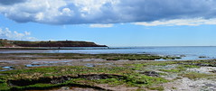Rockpools (karenmarquick) Tags: beach rockpools devon exmouth sandybay holiday summer july haven