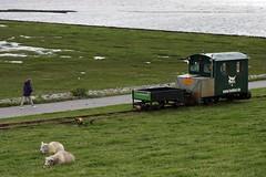 Lorry to Oland (tillwe) Tags: northsea sheep dagebll dike lorry tillwe 201608