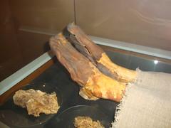 Nakht's Feet Liver and Heart (Hydra5) Tags: feet liver heart nakht egypt mummy royalontariomuseum rom