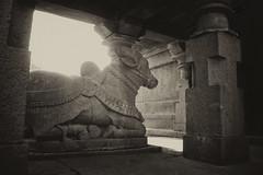 Nandi ($wap) Tags: temple bull india pune maharashtra nandi shiva vehicle