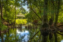 Up the Creek (MichaelSOwens) Tags: hdr creek black water bridge cypress trees knees outdoor landscape topaz adjust simplify georgia usa