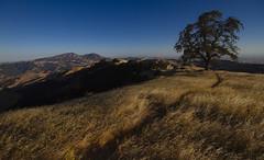 Oak Tree (Davor Desancic) Tags: livermore california ebparksok morganterritoryregionalpreserve morgan territory regional preserve