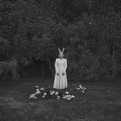 Emily serie (Pedro Daz Molins) Tags: rabbit surrealism surreal surrealist black white garden girl retro vintage conceptual pedro diaz molins nikon d800 blanco negro conejo mascara disfraz flores margaritas flowers jardin surrealismo surrealista