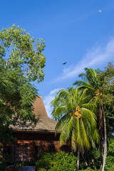 Kampung style (bdrc) Tags: asdgraphy sony a6000 port klang tanjung harapan coast seaside kampung village sigma 30mm prime