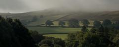 Misty Moors (Alan-Taylor) Tags: mist fog inversion tree woodland boltonabbeyestate yorkshire yorkshiredales landscapes