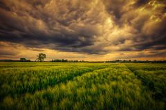 Dunke Wolken im Mai (radonracer) Tags: landscape feld wolken landschaft sonne wetten acker kornfeld niederrhein geldern