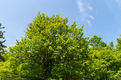 20150531-14h25m06s-_DSC1061.jpg (luism2presno) Tags: naturaleza verde primavera río agua árboles paisaje amarillo bosque montaña cantabria mediodía ucieda