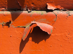 Peeling Paint Abstract IMG_5280 (mikesa10) Tags: orange canada abstract shadows britishcolumbia coquitlam peelingpaint lowermainland essondale canon6d
