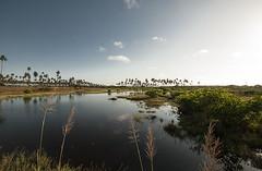 Brazil - Porto de Galinhas (Nailton Barbosa) Tags: nikon d80 nordeste ne pernambuco pe porto de galinhas ipojuca litoral mar oceano brasil brazil brasile brsil brasilien