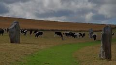 1288-02L (Lozarithm) Tags: landscape cows stones paths avebury 55300 pentaxzoom hdpda55300mmf458edwr