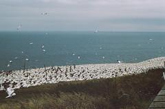 Birds (Pedro fait de la Photo) Tags: asa400 francescocrisci fujifilm gaspesie filmreel
