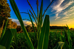 Fields of Green (david_sharo) Tags: davidsharo landscape sunset fields clouds wideangle trees sky closeup