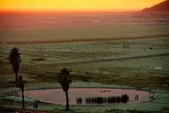 Lagoa ao pr do sol!!! (puri_) Tags: portugal praia prdosol lagoa lils palmeiras juncos montanha horizonte amarelo laranja picmonkey