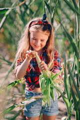 As we steal corn) (DavydchukNikolay) Tags: as we steal corn kids kidsphotography kidsphoto bestkidsphoto photowithkids young girl happy sumer summer