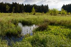 Todtenau (augustin.nagl) Tags: distagon352zf bayerischerwald bayern moor naturschutzgebiet todtenau zeiss distagont235 zf2