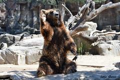 Hola amigos!!! (Jotha Garcia) Tags: madrid bear park parque summer tree bird stone arbol zoo july julio verano pajaro piedras nikond3200 zoological jothagarcia