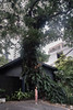 BIGTrees-Anunta-Miti Ruangkritya (bigtreesproject) Tags: 66835548622 mitiruangkritya miti139hotmailcom mitimiticom wwwmiticom
