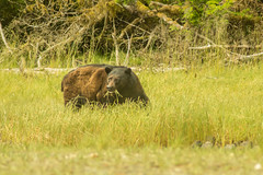 Beary the Bear (GregoryGHV) Tags: haidagwaii queencharlotteislandsislandsandspithaidagwaiimoresbygrae peel inlet englefield bay takkakia lake douglass mudge