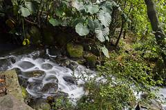 Aguas de paso (Tato Avila) Tags: jardn botnico bogot colombia naturaleza vida aguas colores hojas roca piedras